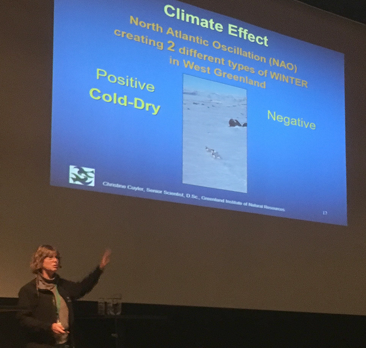Klima var eit heitt tema på Arctic Ungulate Conference. Foto: Kjell Bitustøyl