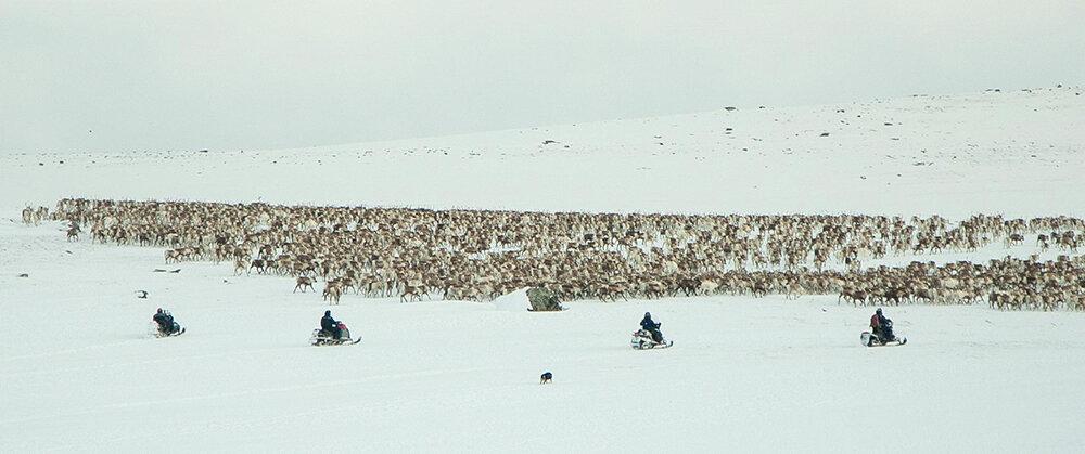 På Rørosvidda har snøskuteren, som i nesten alle tamreinområde, teke over som reingjetarens viktigaste reiskap vinterstid. Foto: Kjell Bitustøyl