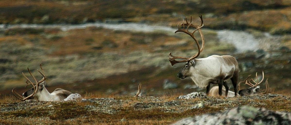 Foto: Kjell Bitustøyl