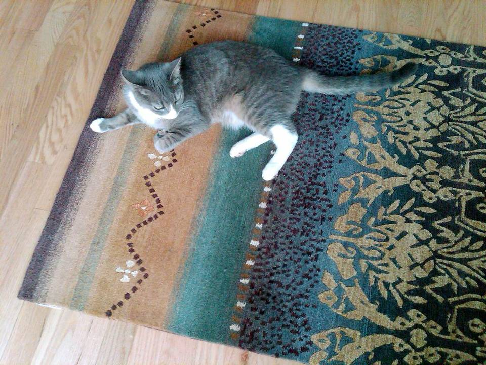 Linda Zoffer chose Tibetan wool carpets for a client with three cats and a dog. A Tibetan wool carpet is a good choice for a home with pets (or children). They are sturdy and clean well.