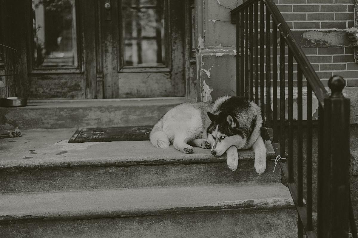 Dog New York