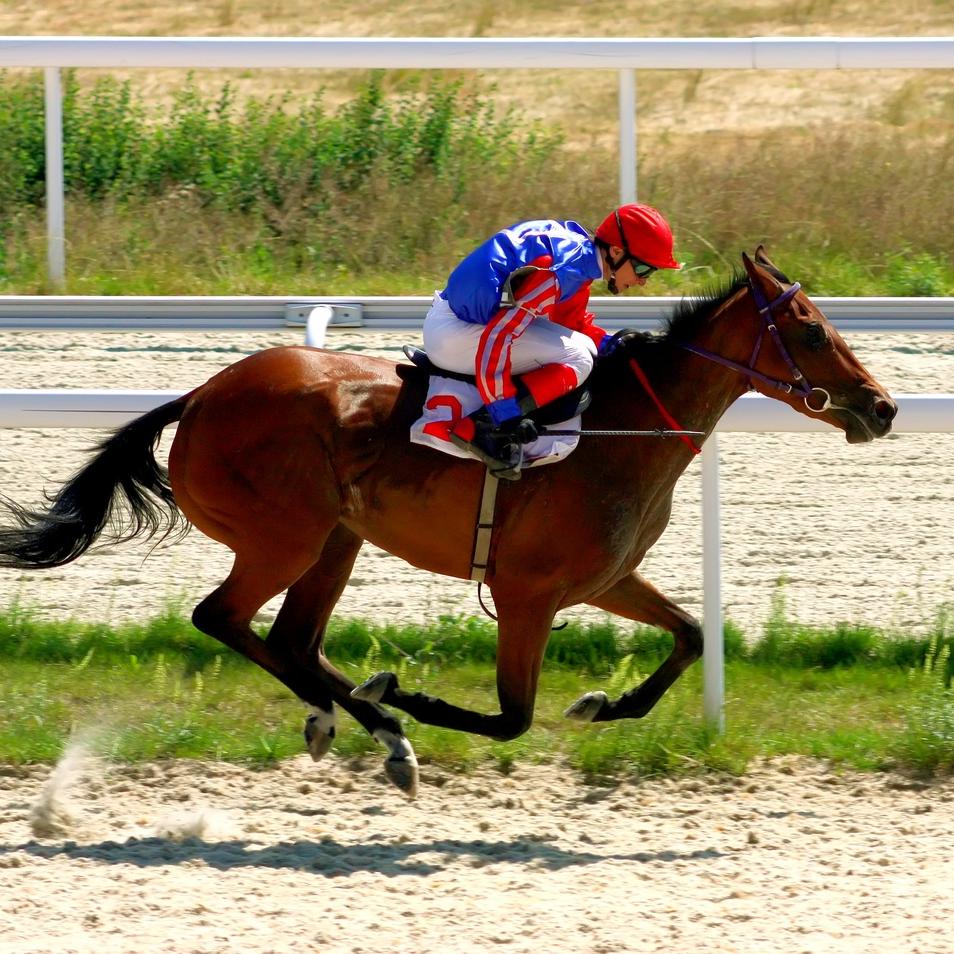 Lasix: the drug debate which is bleeding US horse racing dry