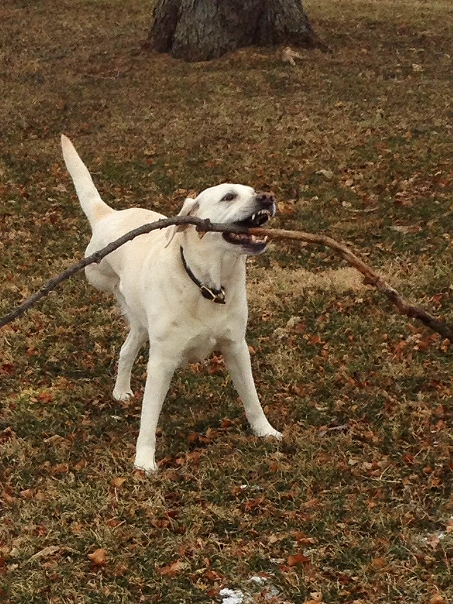 Dudley proudly presents his stick and shows his happy spirit