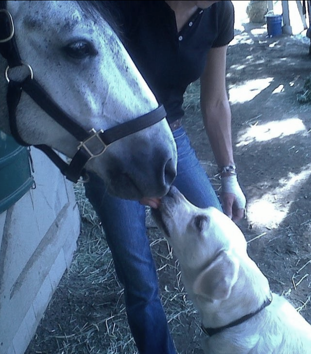 Dudley loving his equine twin in the barn