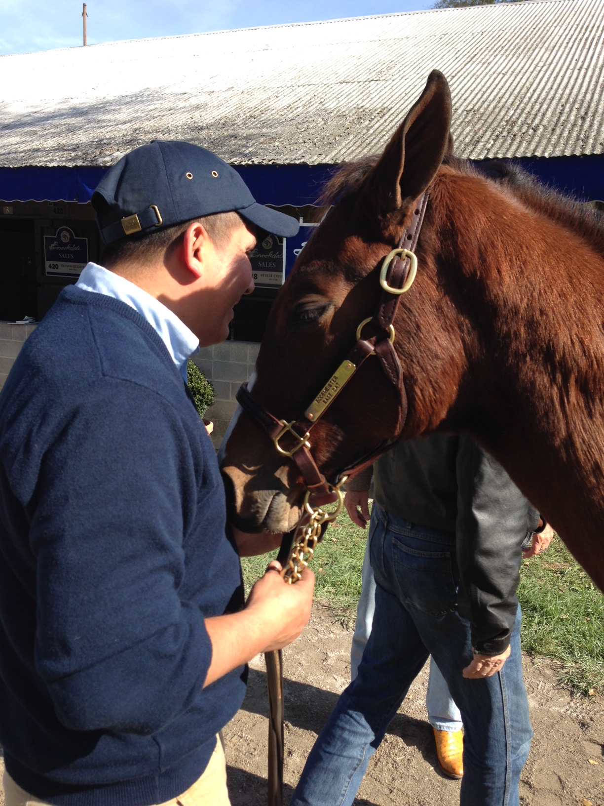 A groom is key to keeping the horse calm. The Sage Car weanling being soothed by her groom