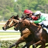 North American Horse Racing Terminology - Claming Race