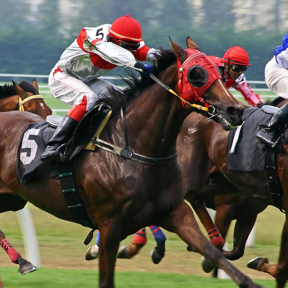 North American Horse Racing Terminology - Juvenille