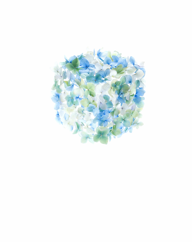 Petal Cube.jpg