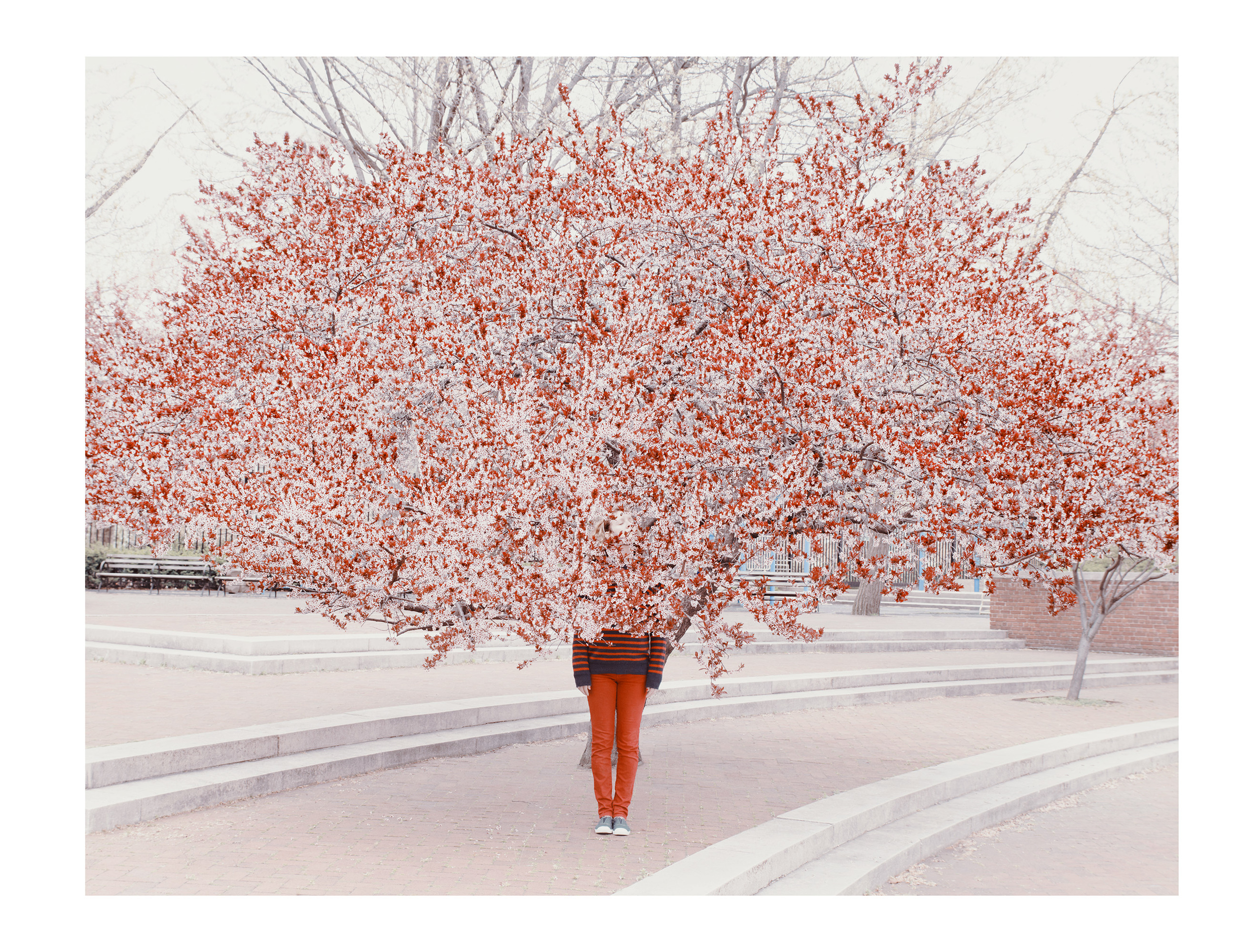 Pink_Tree_15.jpg
