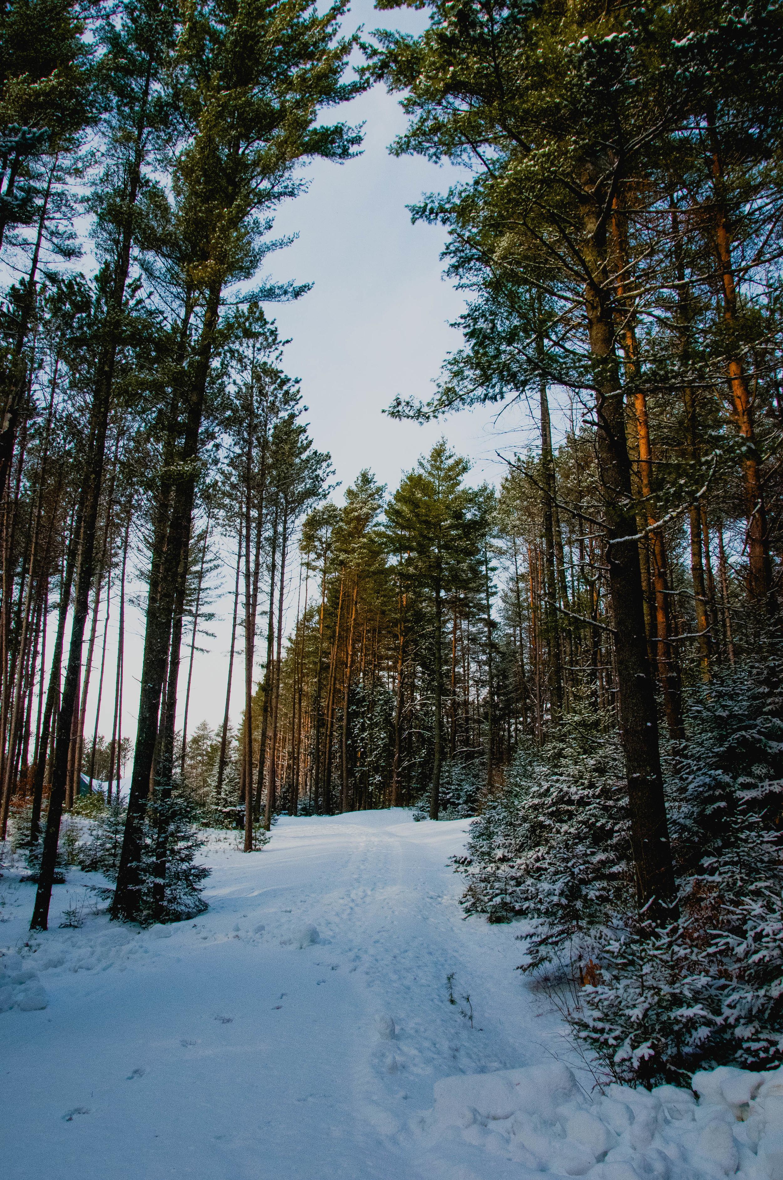 vermont-forest