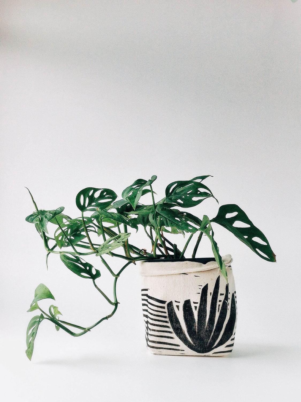agave-planter-cozy.jpg