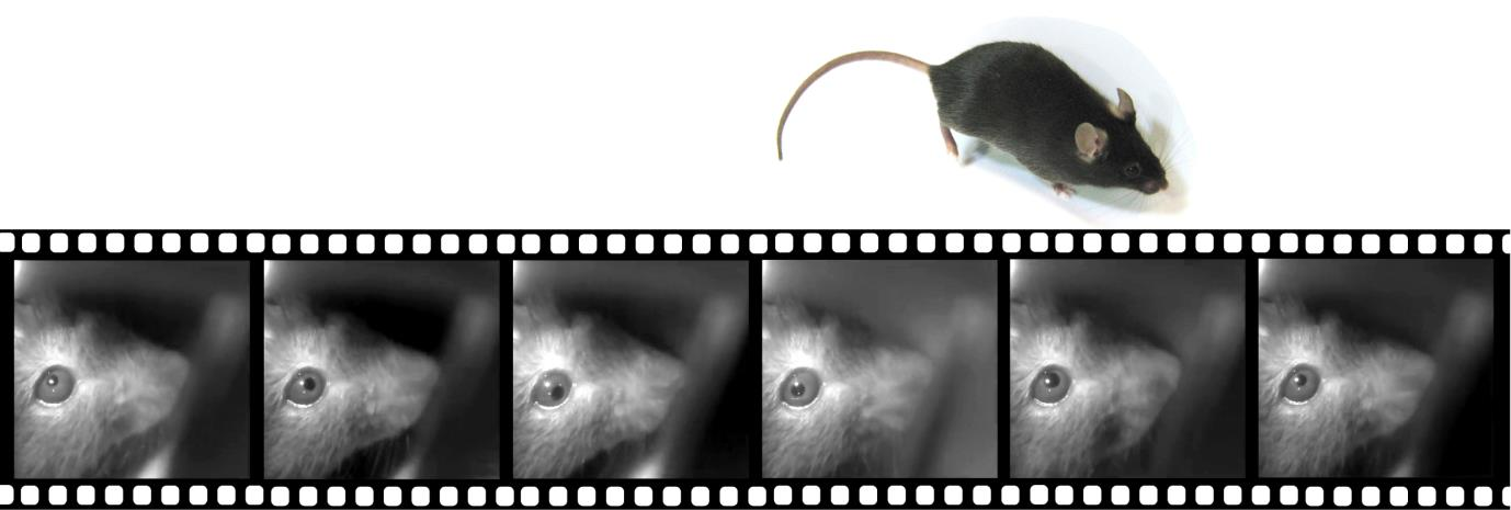 filmstrip_mouse.jpg