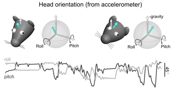 head_orientation.png