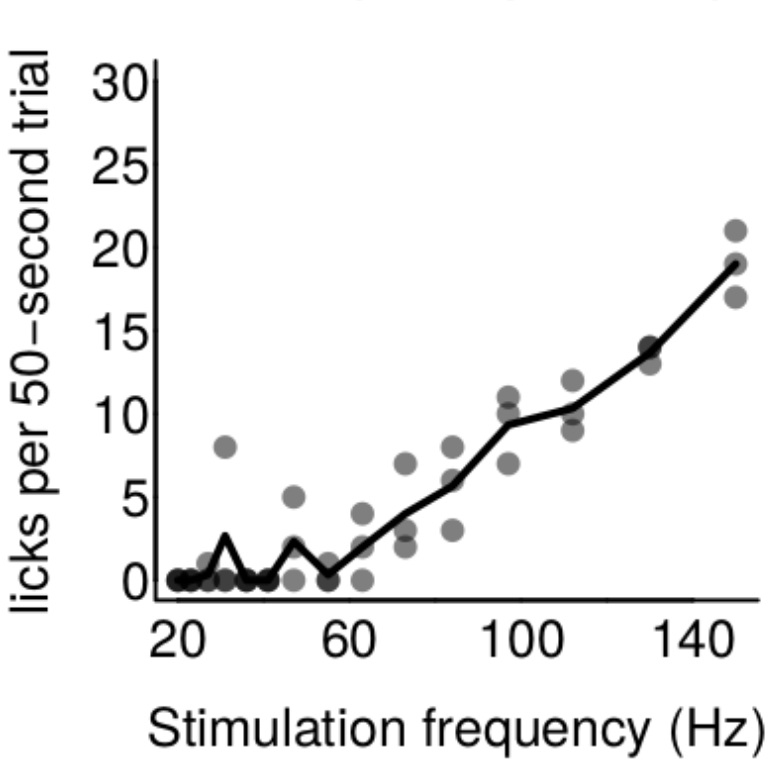 Frequency-dependent responses in an  intracranial self-stimulation  paradigm using StimJim. Electrode is in medial fore-brain bundle.