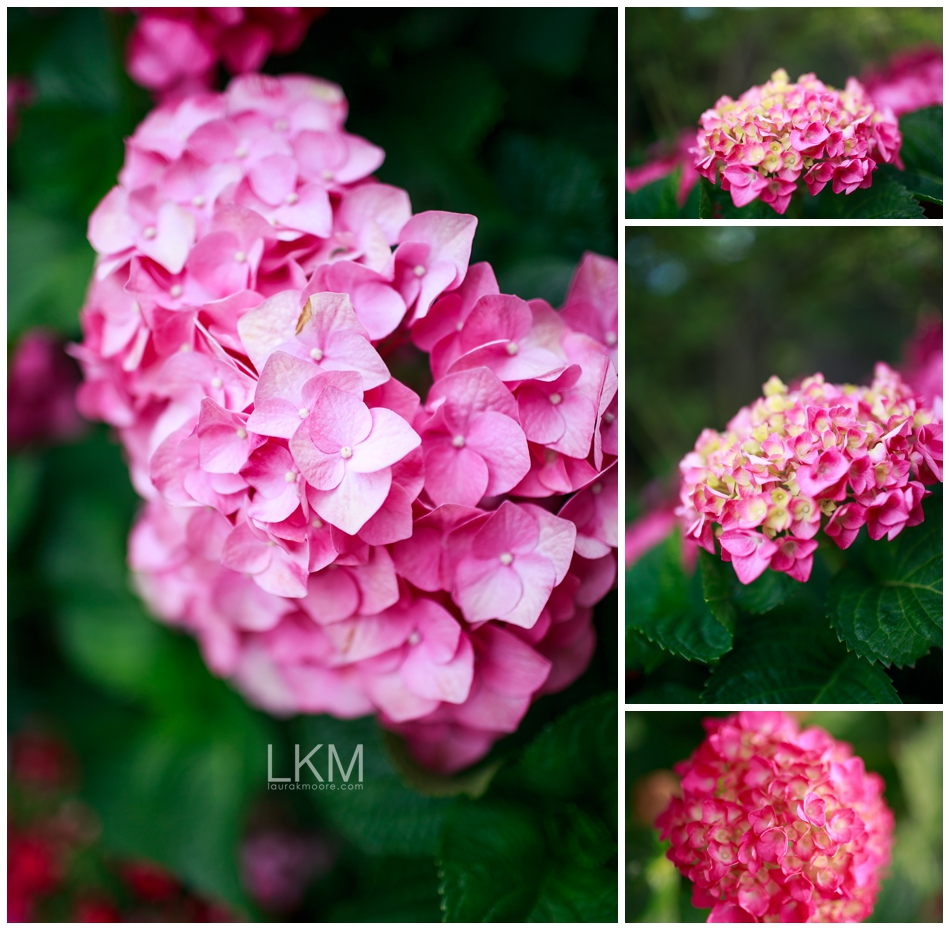 san-jose-backyard-wedding-plum-orchids-DIY-inspiration_0114.jpg