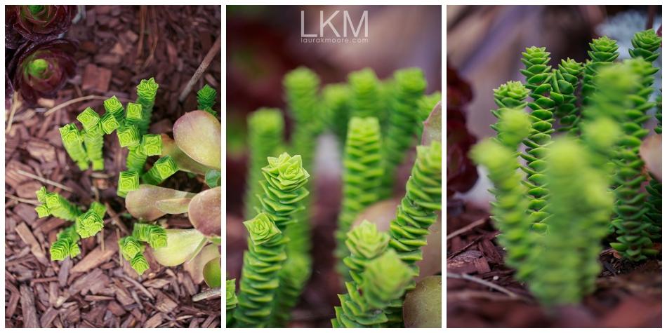san-jose-backyard-wedding-plum-orchids-DIY-inspiration_0129.jpg