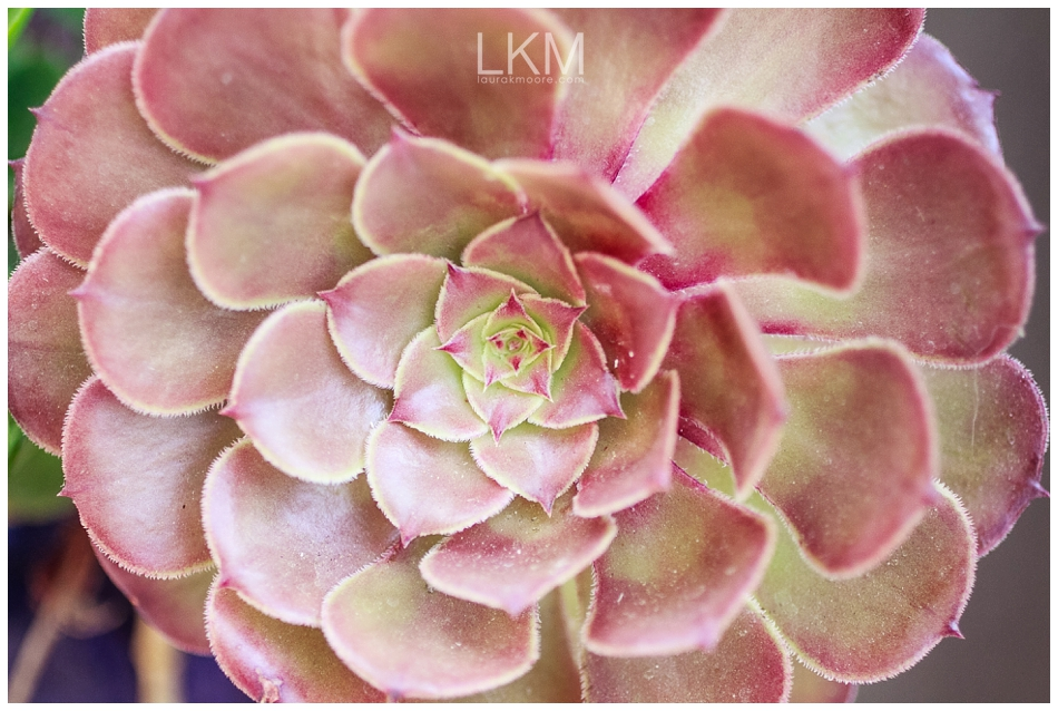san-jose-backyard-wedding-plum-orchids-DIY-inspiration_0130.jpg