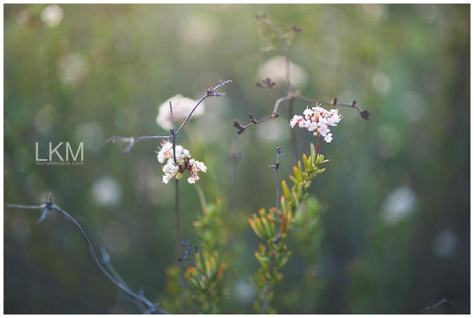 tucson-october-textures-wild-plant-life_0001.jpg