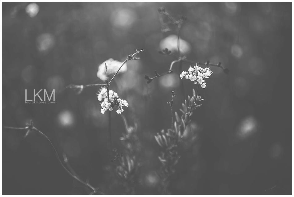 tucson-october-textures-wild-plant-life_0002.jpg