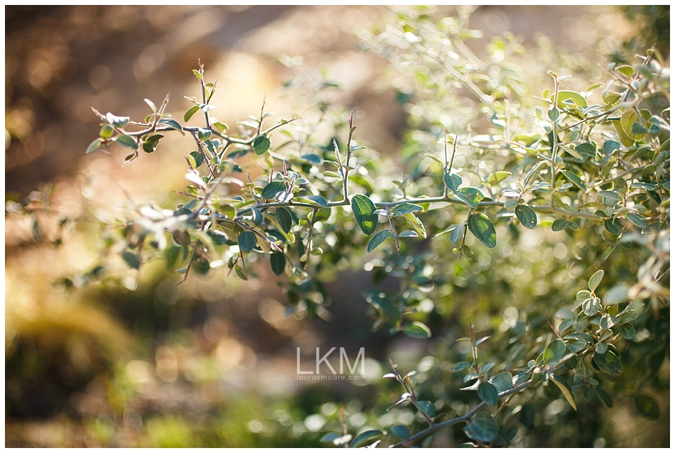 Mt-Lemmon-Tucson-Family-Portrait-Photographer-Lepeau_0054.jpg