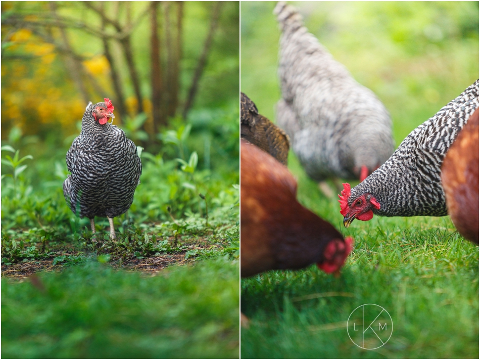 turkey-hill-farm-portland-maine-engagement-session_0008.jpg