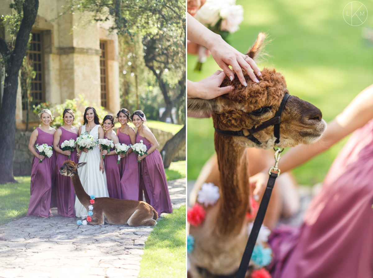 san-antonio-wedding-reception-ideas-llama
