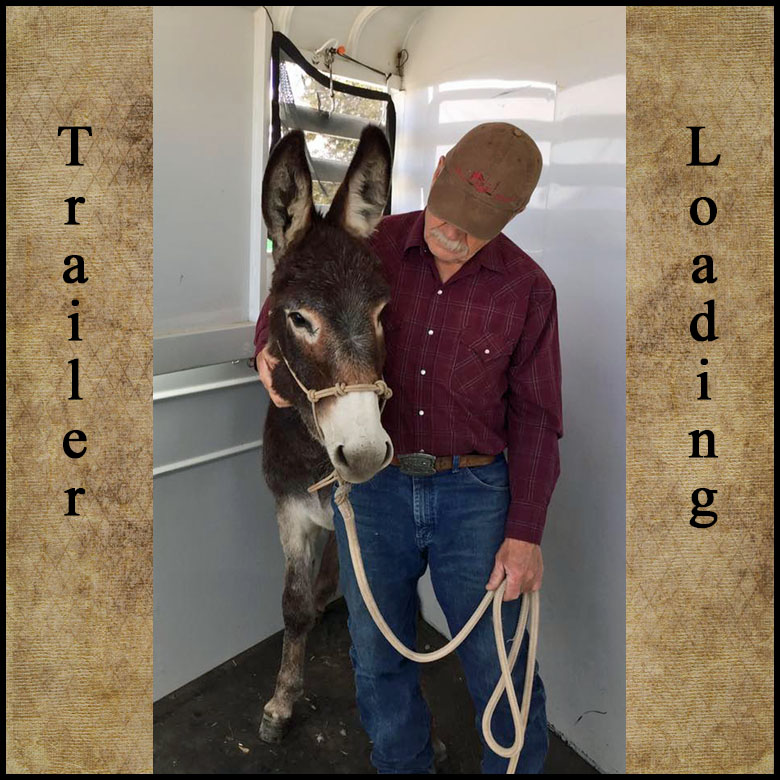 Clinic Fee:  $150. This is the number one problem call. Can't get your horse into the trailer? Bruce will work with your horse for trailer loading. Then Bruce will have you load your horse into the trailer. Call for Details at (520) 508-1556. Travel Mileage will apply if trailer loading is not at Jabez Ranch. No Stallions Please.