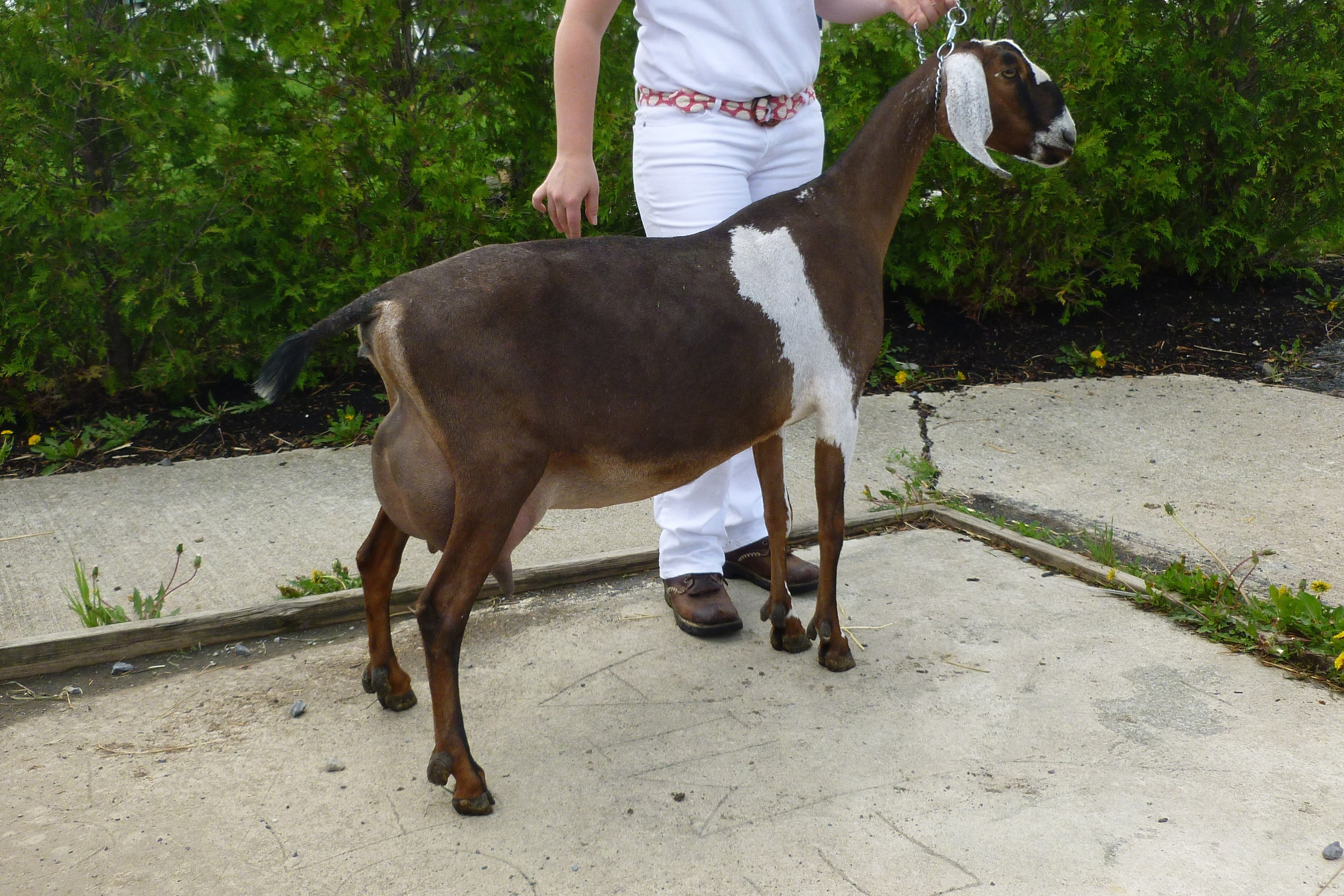 Daughter: King's Rock Pipin' Hot 2*M (3 years old, 2nd freshener)