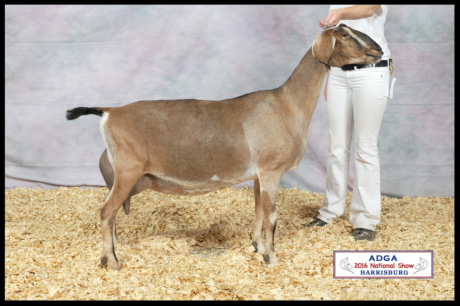 Carmel pictured at age 8, 5th place Aged Doe