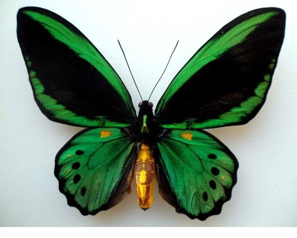 butterflyDATA.jpg