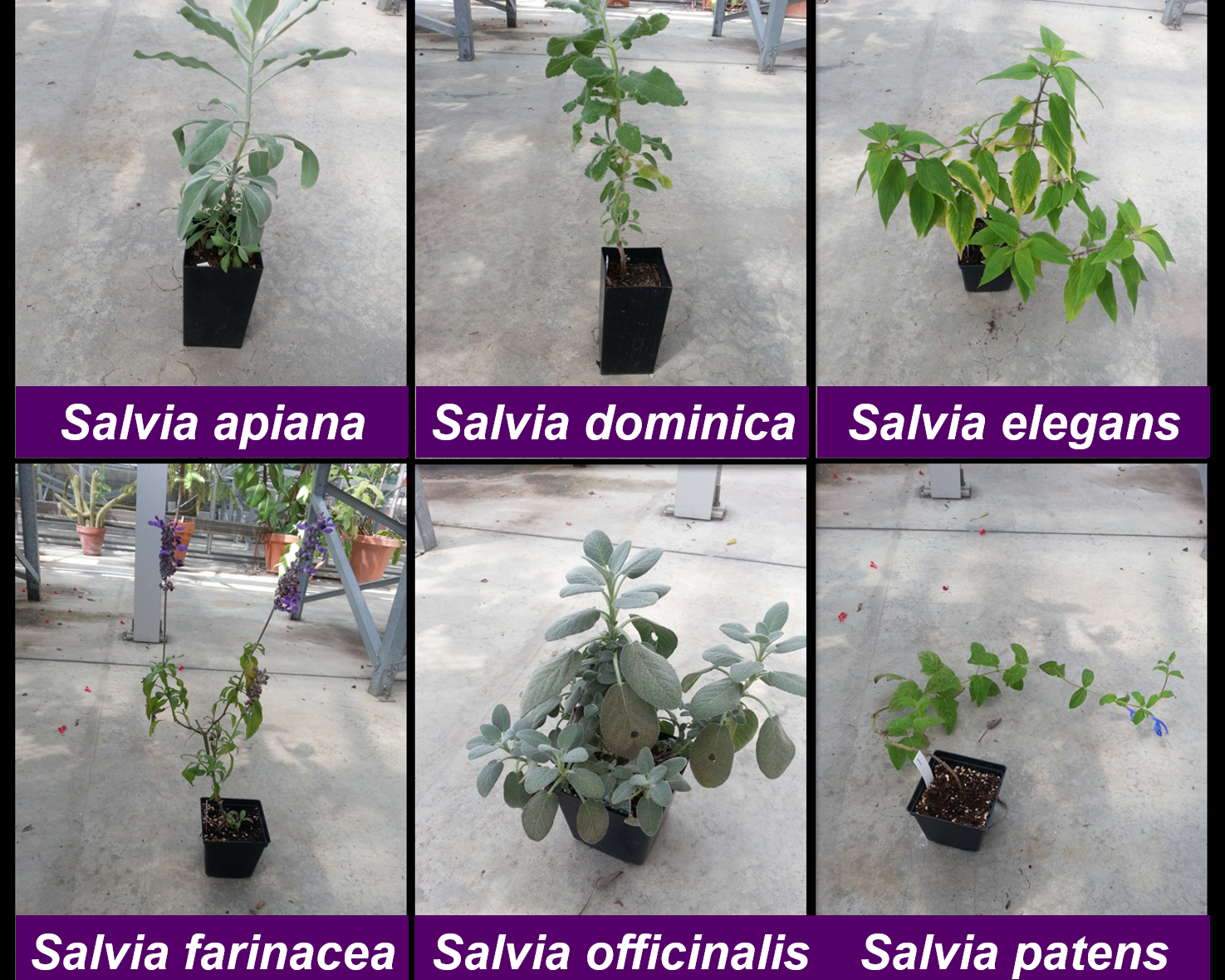 Plants labeled.png