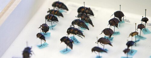 Innovation+Hall+Beetles[2].jpg