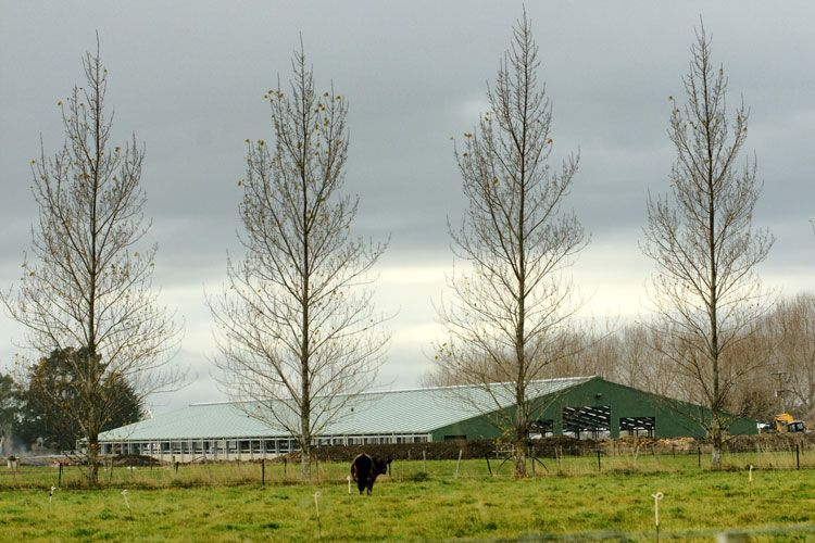 Cowhouse-Construction-Ltd-092---1128-big.jpg