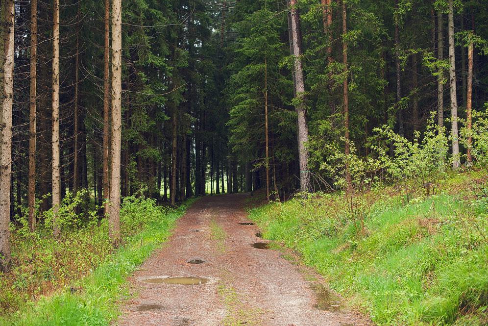 Lohnbachfall_3.jpg