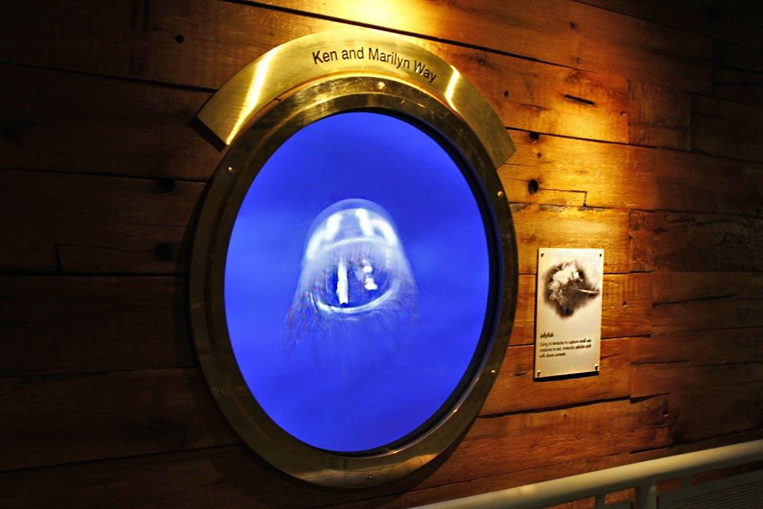 Penguin House Exhibit Design - Digital Display