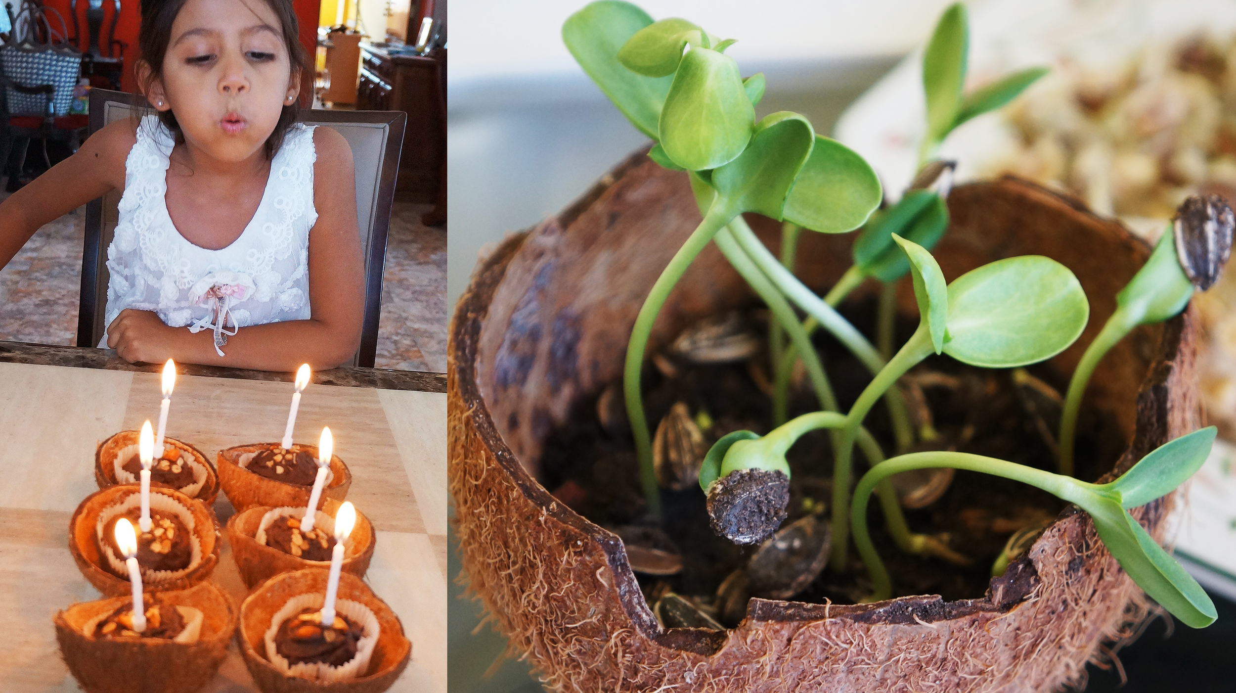 Using dried shells as bowls and pots for seedlings and sprouts