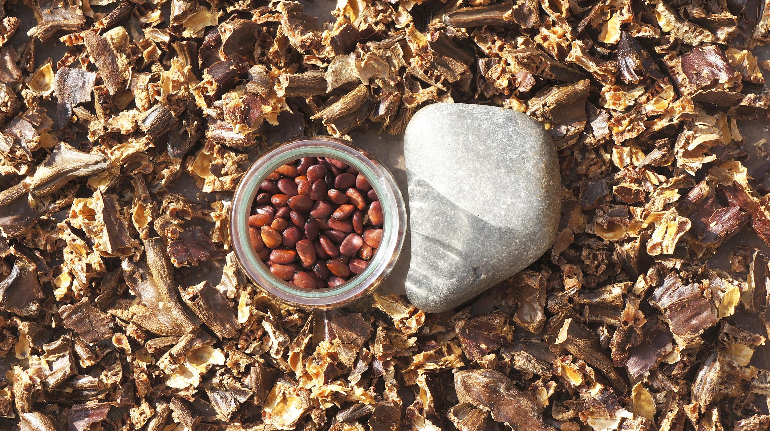 Vainas molidas a la piedra y separando semillas. Gran ejercicio para los brazos!