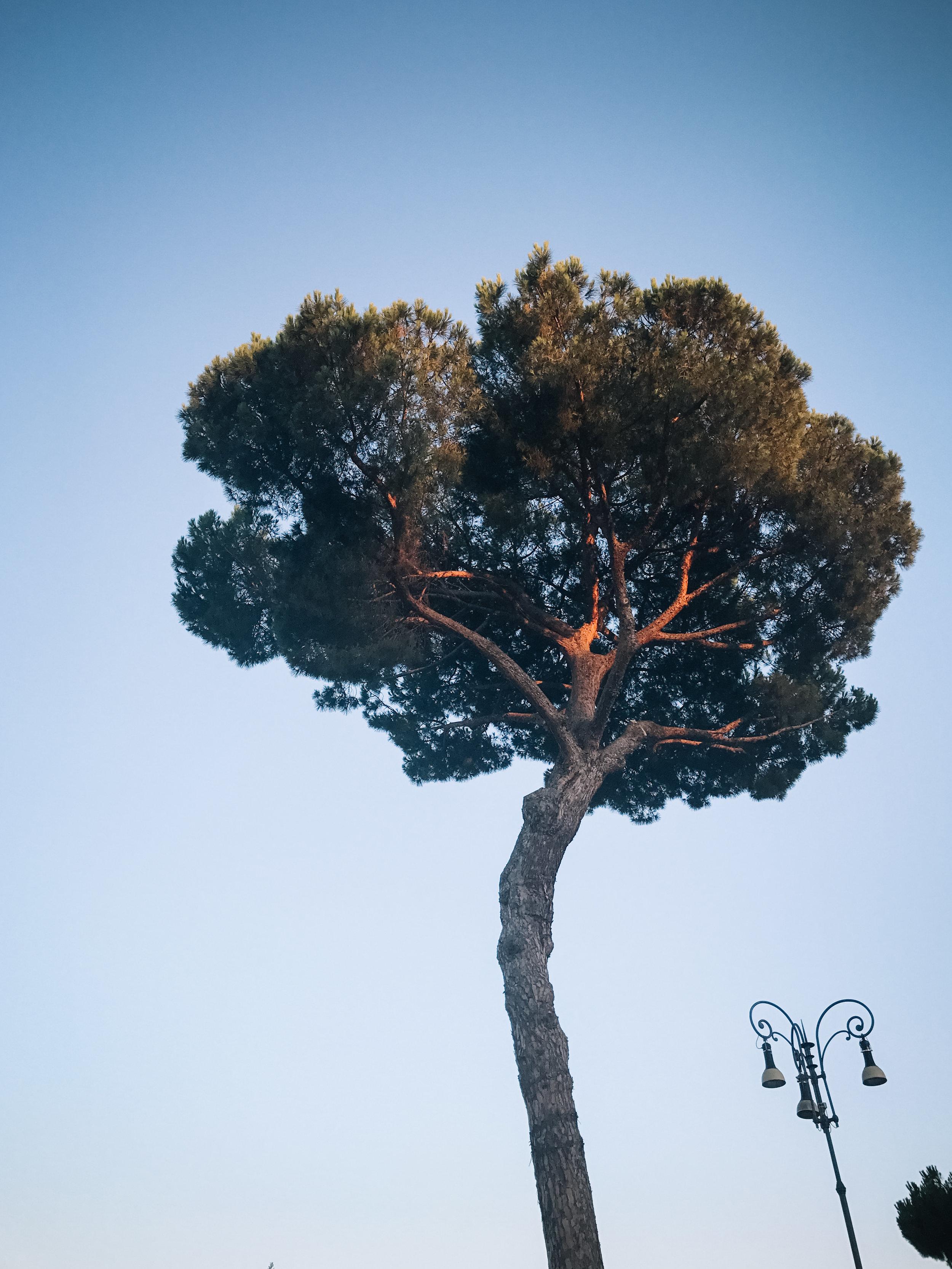 Italy-Rome-5.jpg