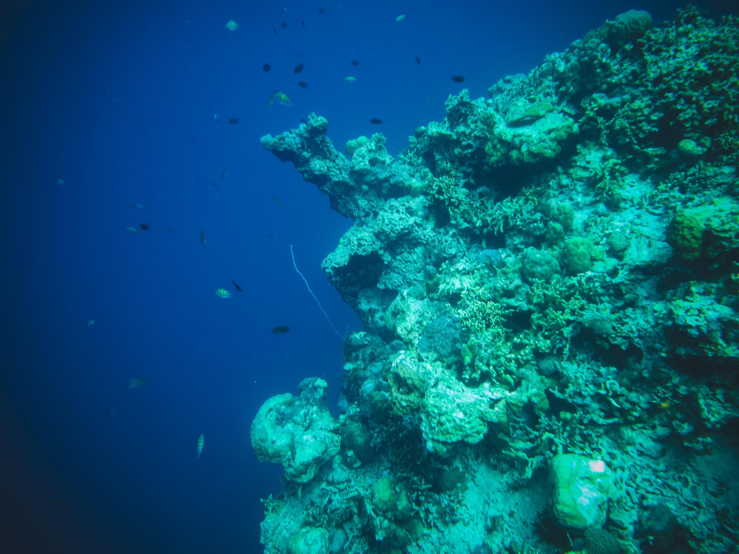 Coron - 2018 - underwater cam -9.jpg