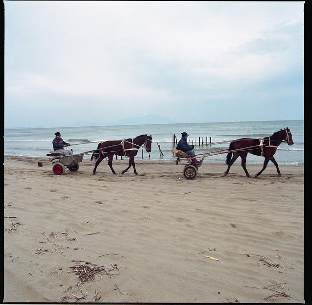 who rides the camorra horses