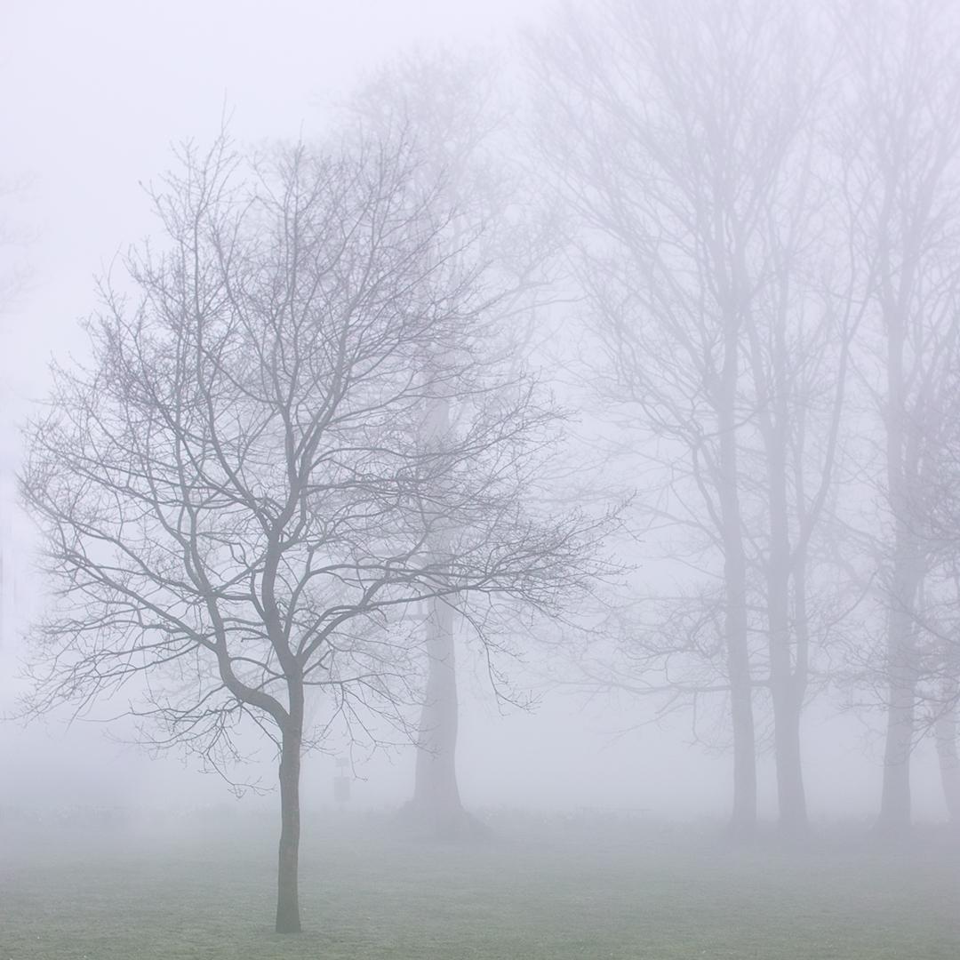 Fog Bound III copy.jpg