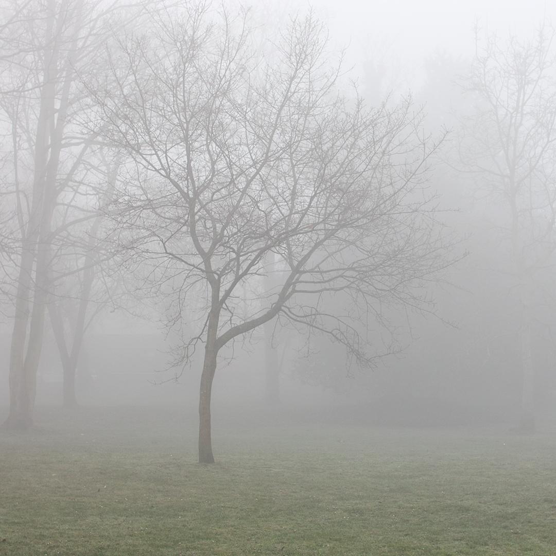 Fog Bound I copy.jpg