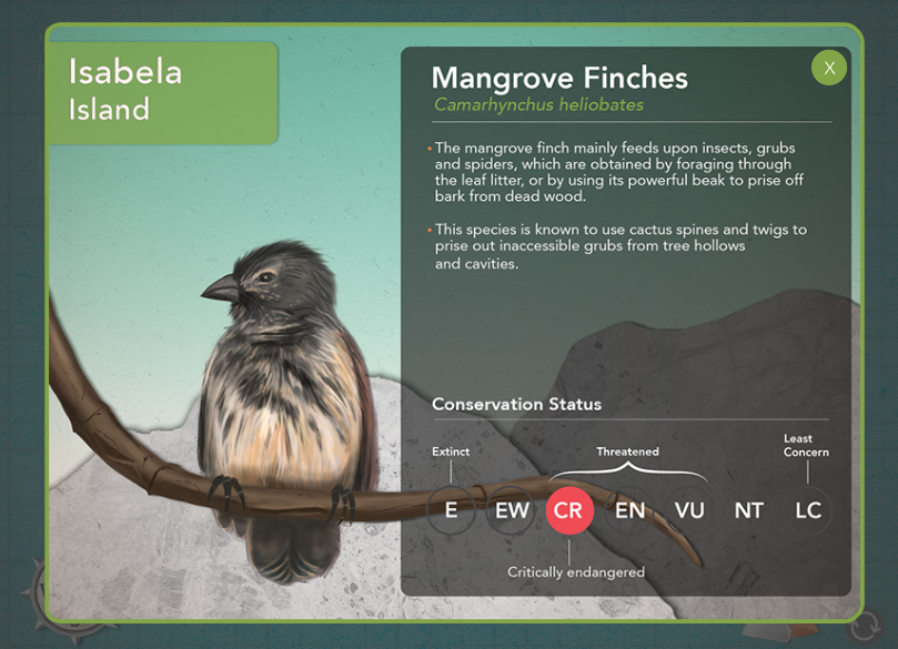 Info about one of the finches