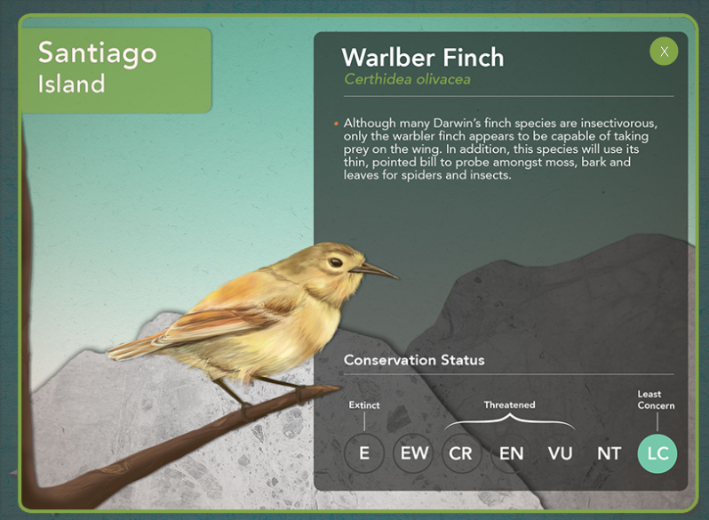 Info about the Warbler Finch