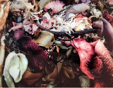 Noyo Sea Bouquet by Alisemarie