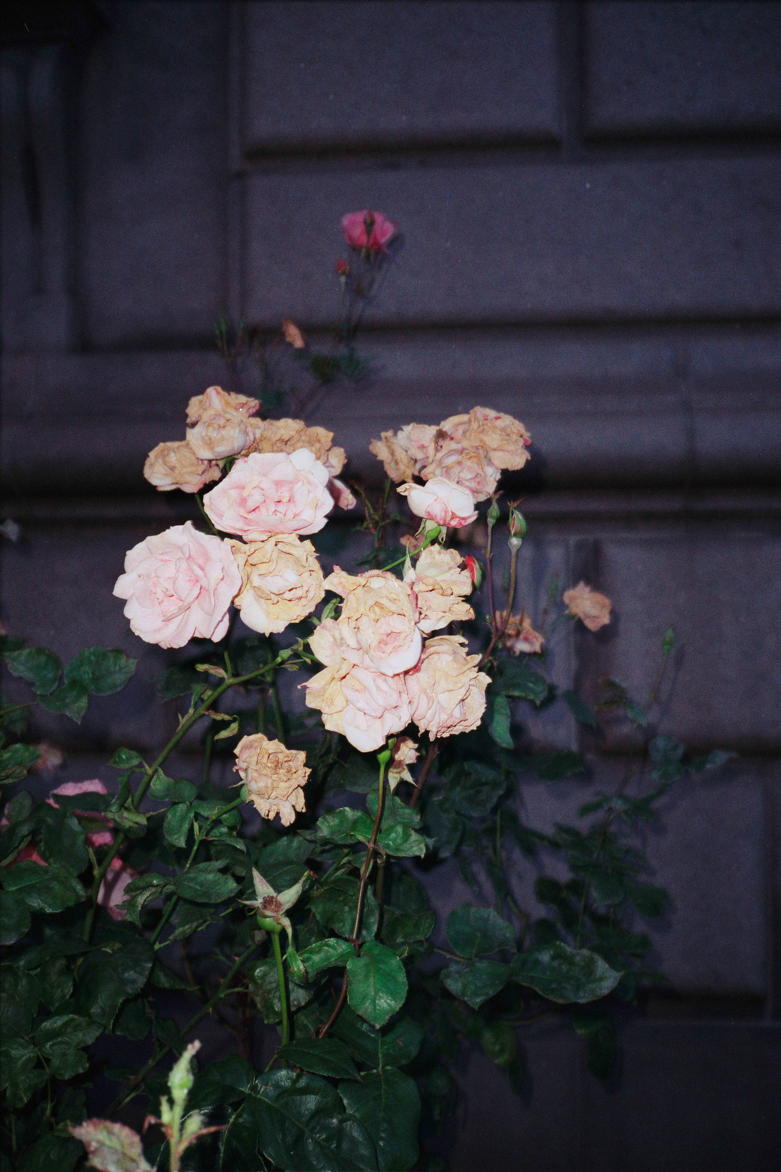 Photographs-19.jpg
