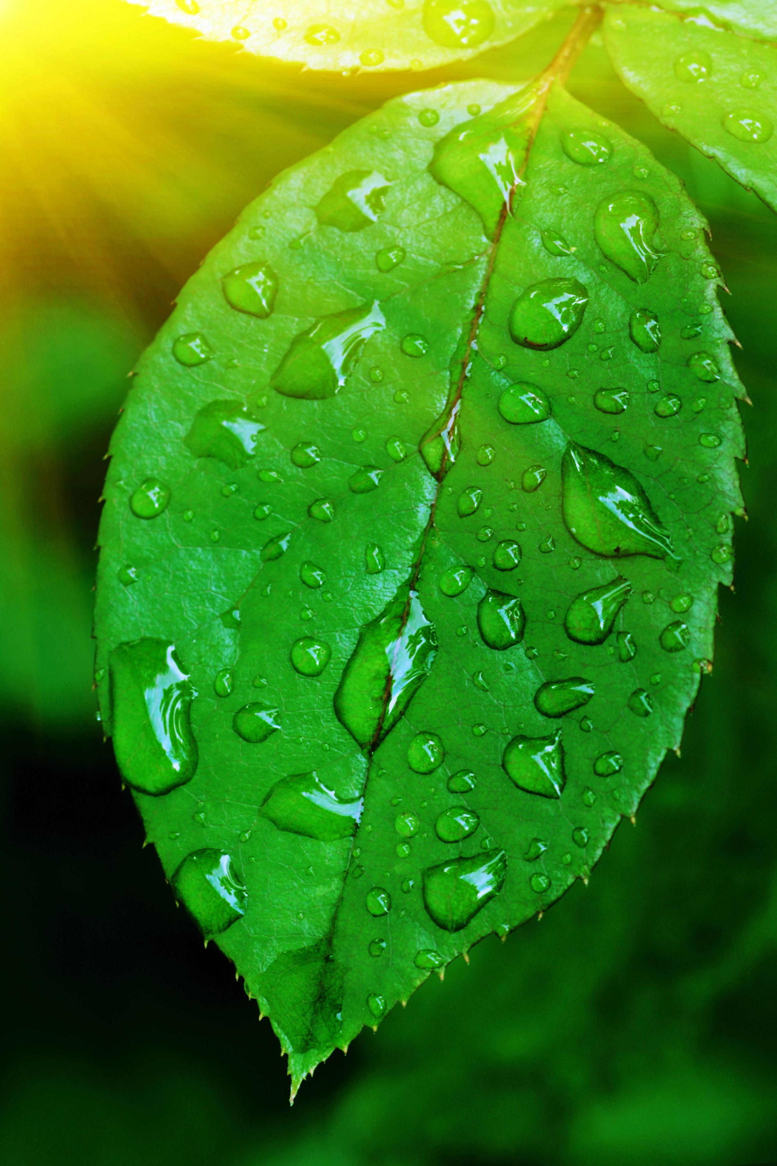 leaf-water-rain-droplets-leaves-texture-image-1-929.jpg