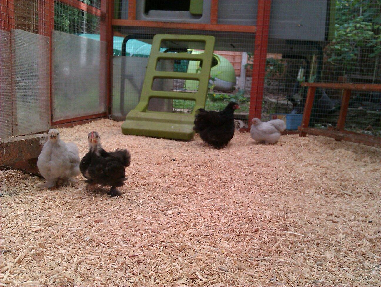 small farm coup- bedding.jpg