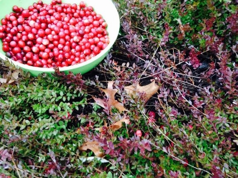cranberries8.jpg