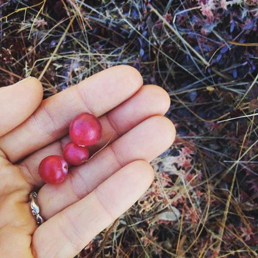 Winter-harvested Cranberry